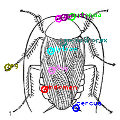 cockroach_0028.png