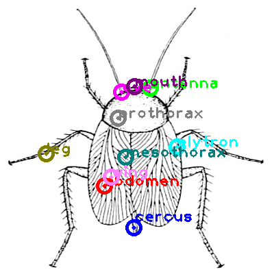 cockroach_0034.png