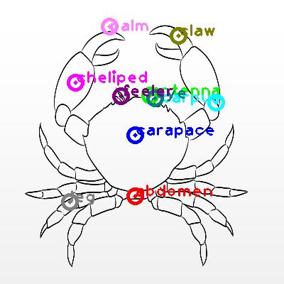 crab_0000.png