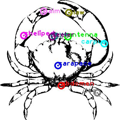 crab_0002.png
