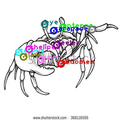 crab_0017.png
