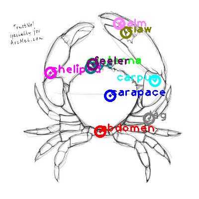 crab_0018.png