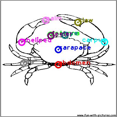 crab_0021.png