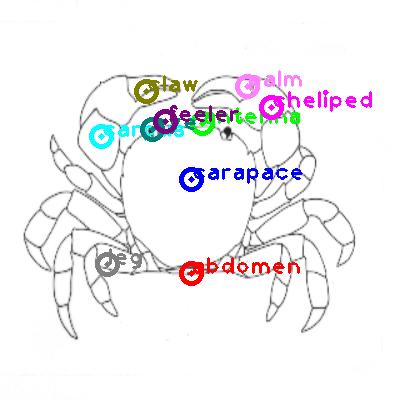crab_0024.png