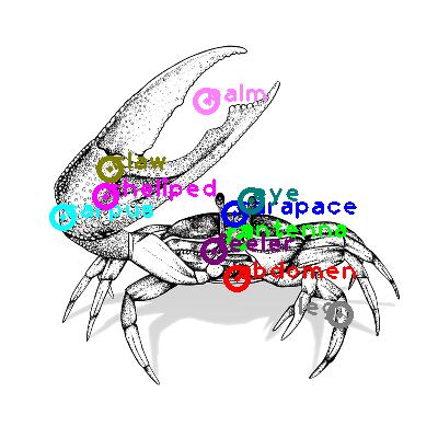 crab_0031.png