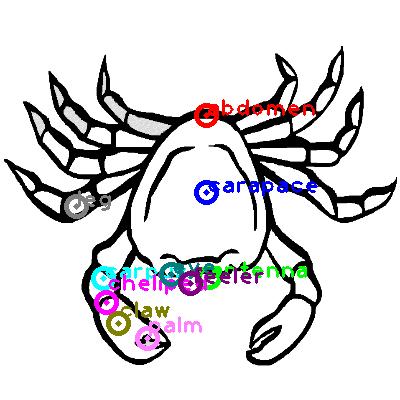 crab_0035.png