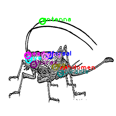 cricket_0001.png