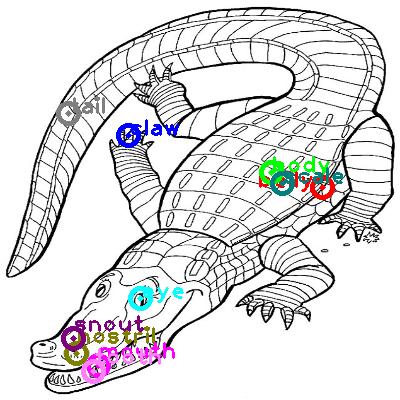 crocodile_0012.png