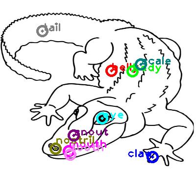 crocodile_0015.png