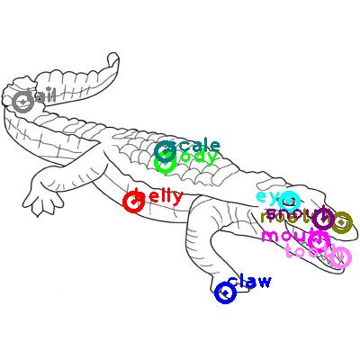 crocodile_0017.png