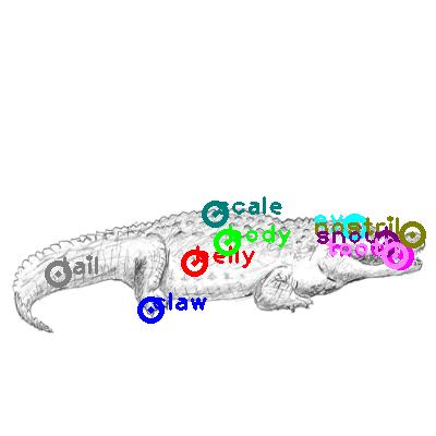 crocodile_0031.png