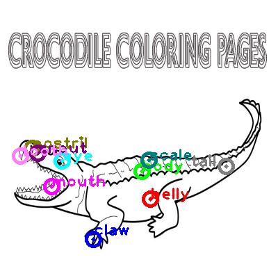 crocodile_0038.png