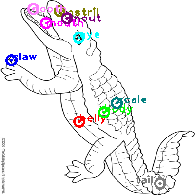 crocodile_0044.png