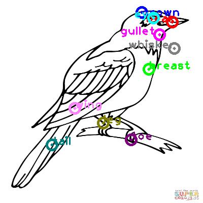 cuckoo_0011.png