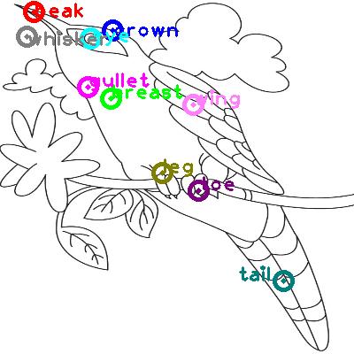 cuckoo_0019.png