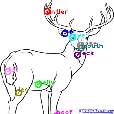 deer_0001.png