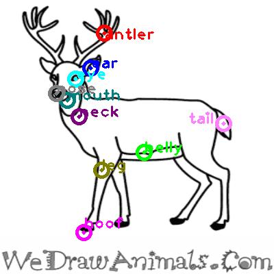 deer_0018.png