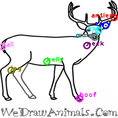 deer_0022.png