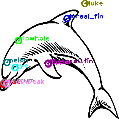 dolphin_0003.png