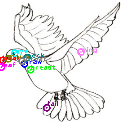 dove_0007.png