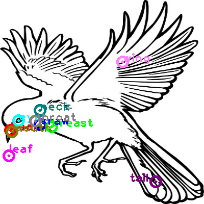 dove_0013.png