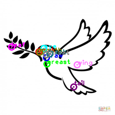 dove_0017.png