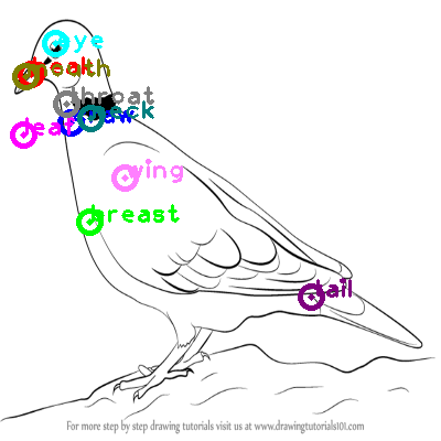 dove_0018.png