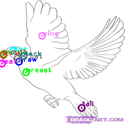 dove_0023.png