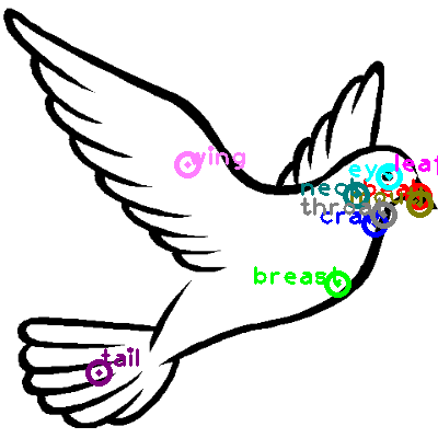 dove_0025.png