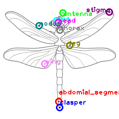 dragonfly_0004.png
