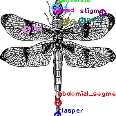 dragonfly_0005.png