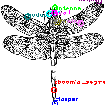 dragonfly_0008.png