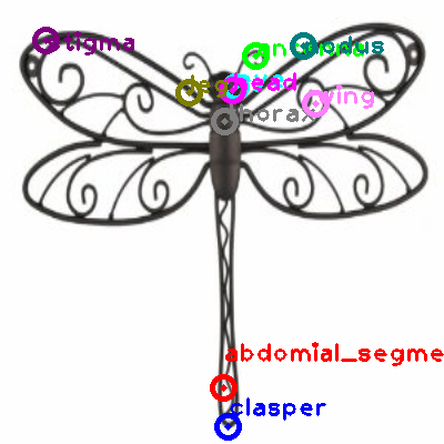 dragonfly_0009.png