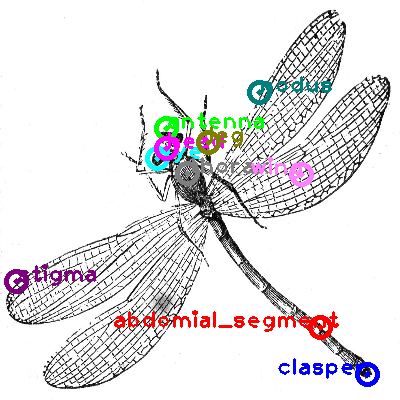 dragonfly_0012.png
