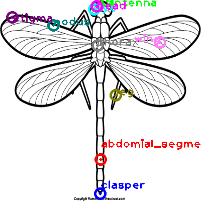 dragonfly_0016.png