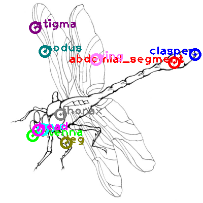dragonfly_0021.png