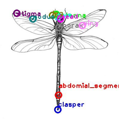 dragonfly_0022.png