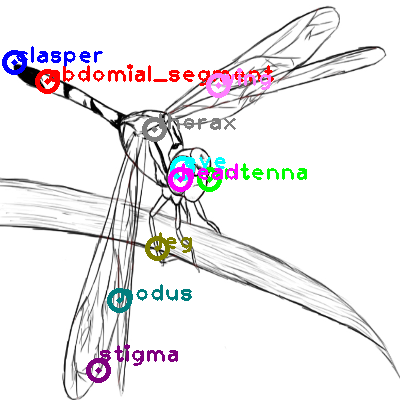 dragonfly_0031.png