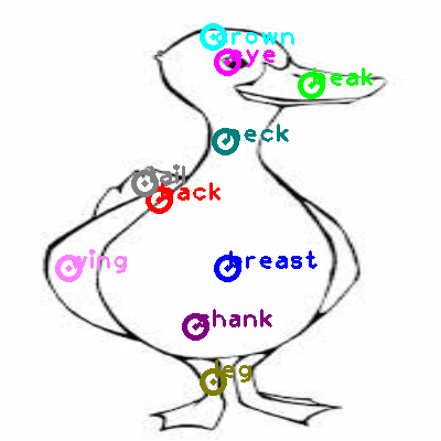 duck_0030.png