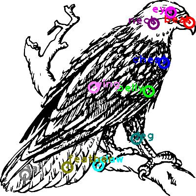 eagle_0002.png