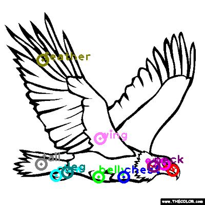 eagle_0003.png