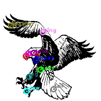 eagle_0006.png