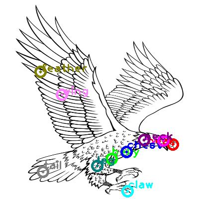 eagle_0010.png