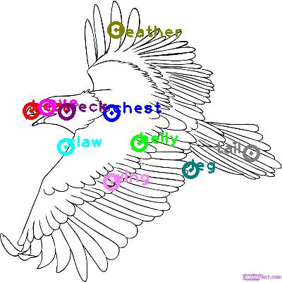 eagle_0012.png