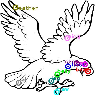 eagle_0013.png
