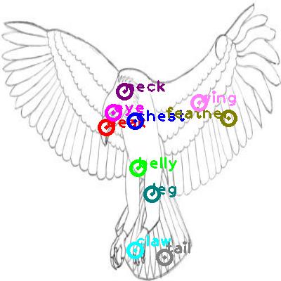 eagle_0014.png