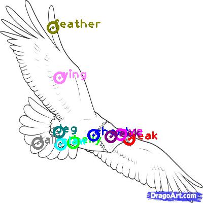 eagle_0017.png