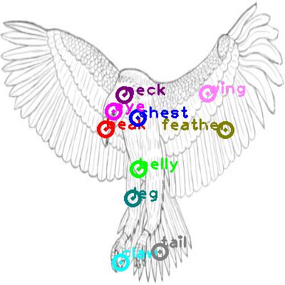 eagle_0018.png