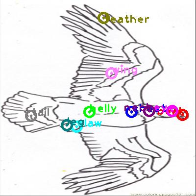 eagle_0019.png