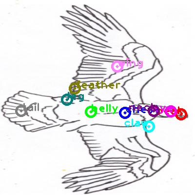 eagle_0021.png